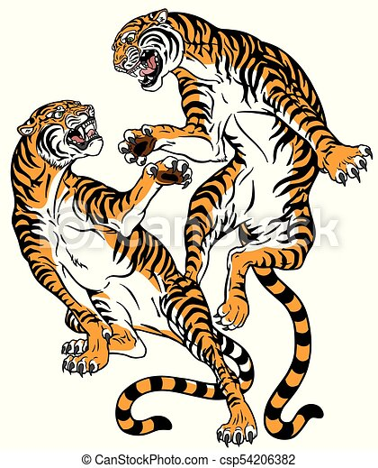 ceda98817 Fight of two tigers. Pair of tigers in the battle . two fighting big ...