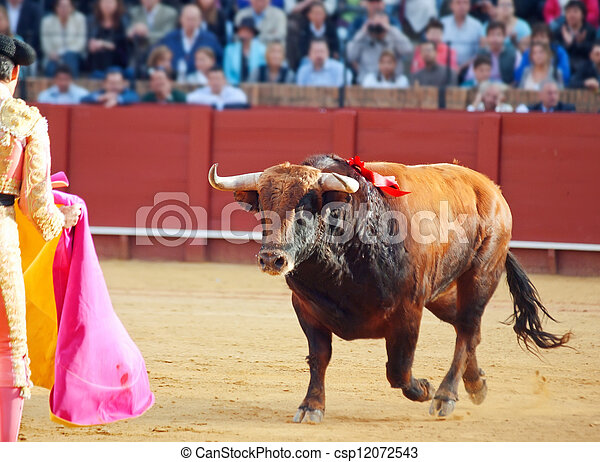Fighting  brown young bull  running at matador.  - csp12072543
