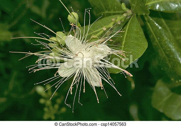 figi, botanica - csp14057563