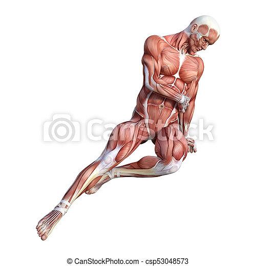 Figura, anatomía, interpretación, blanco masculino, 3d.... imagen ...