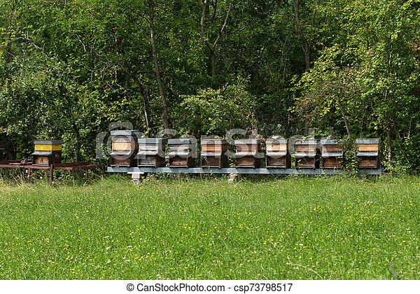 fila, pradera, miel - csp73798517