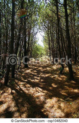 Filas de árboles proporcionando sombra - csp10482040