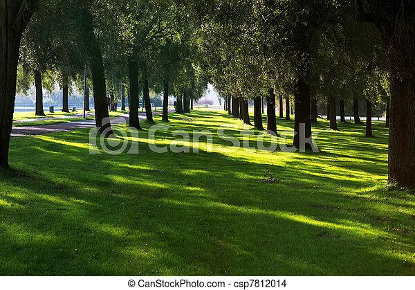 filas, árvore - csp7812014