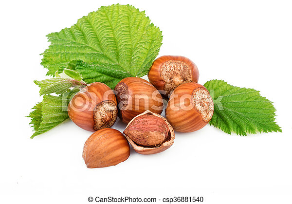 filbert nuts with leaves on white background - csp36881540