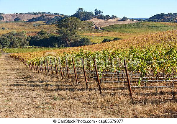 file, uva, viti, pendio, napa, dietro, valle - csp65579077