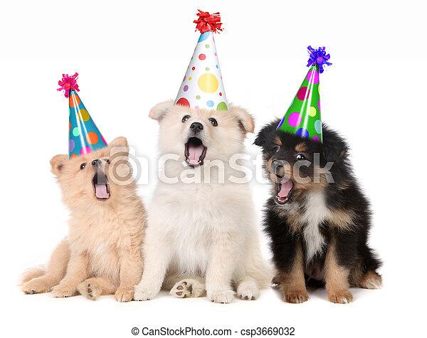 filhotes cachorro, aniversário, cantando, feliz, canção - csp3669032