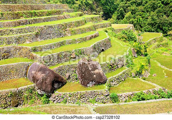 Filipinas Filipinas Norte Batad Terrazas Cultivo