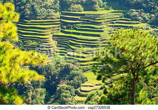 Filipinas Filipinas Norte Batad Terrazas Cultivo Banaue Arroz
