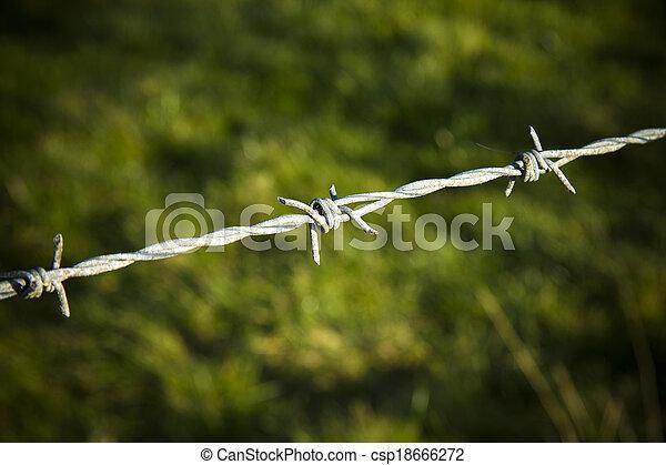 filo spinato, dettaglio - csp18666272
