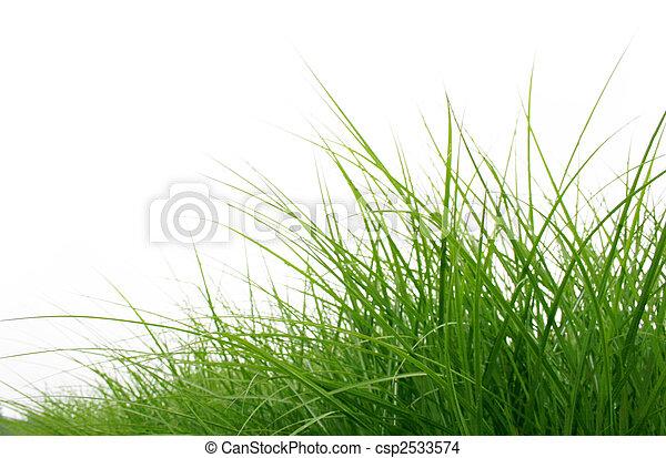 fin, herbe, vert, haut - csp2533574