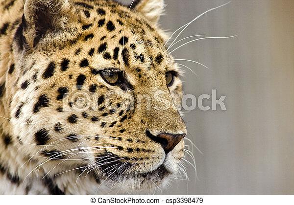fin, léopard, haut - csp3398479