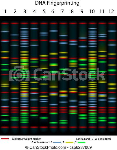 fingerprinting, dna - csp6237809