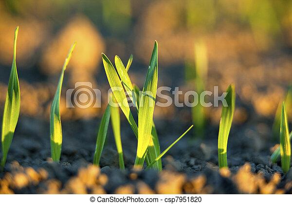 Finnish agriculture - csp7951820
