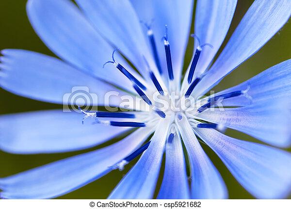 fiore blu - csp5921682