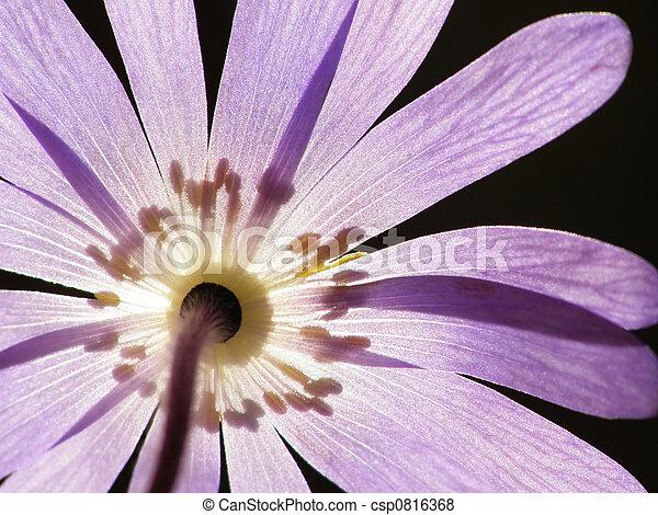 fiore blu - csp0816368