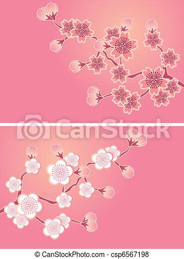 fiore, ciliegia, set, cartelle - csp6567198