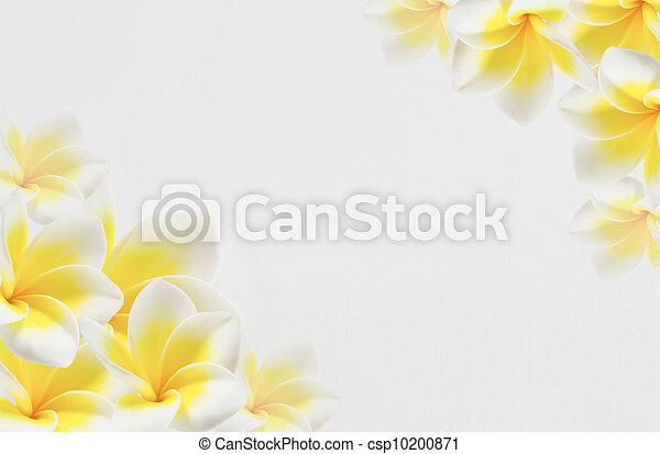 fiore, fondo - csp10200871