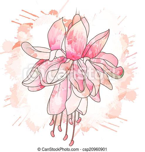 Fiore, Fucsia, Disegno