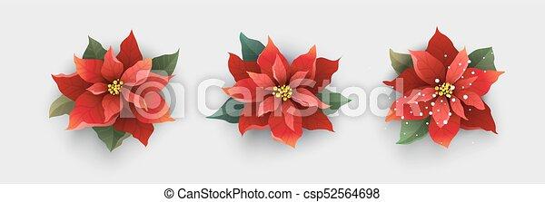 Stella Di Natale Bianca.Fiore Isolato Stella Di Natale Natale Bianco Rosso