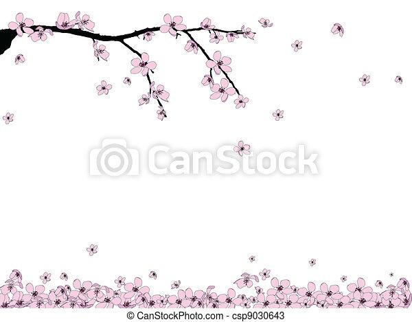 fiore, ramo, ciliegia, bello - csp9030643