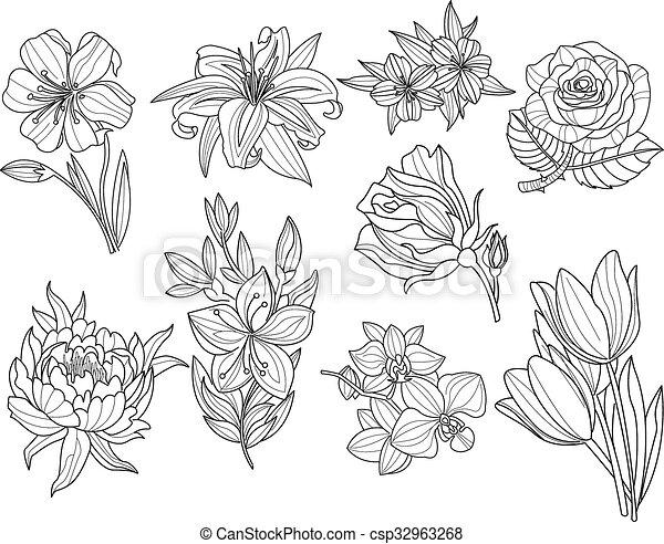 fiore, set., illustrazione, mano, vettore, disegnato - csp32963268