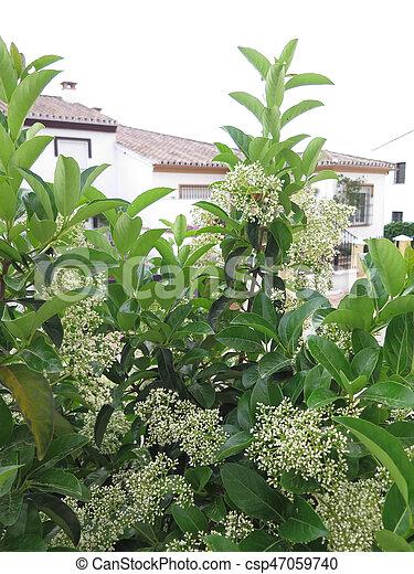 Arbusto Fiori Bianchi.Fiori Bianchi Arbusto Fiori Andalusian Bianco Arbusto Villaggio