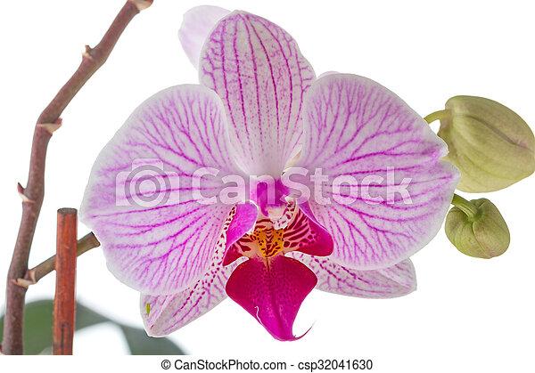 Fiori Orchidea Bianchi.Fiori Bianchi Closeup Orchidea Fiori Bianchi Isolato Fondo