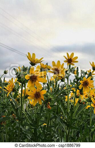 Fiori Gialli Bordo Strada.Fiori Bordo Della Strada Ovest Wildflowers Texas Giallo