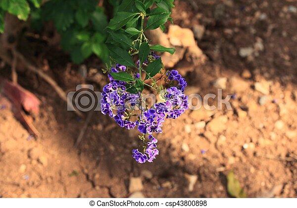 fiori, cielo - csp43800898