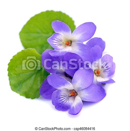 Immagini Fiori Violette.Fiori Isolato Violette Fiori Bianco Backgrounds Isolato