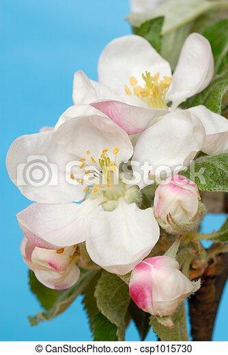 fiori, mela - csp1015730