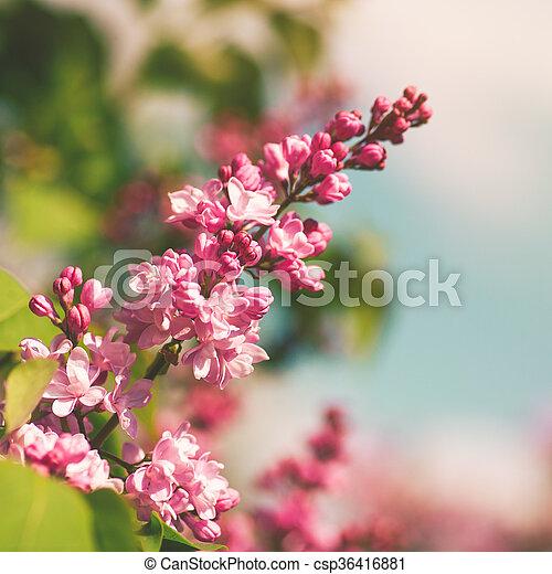 Fiori Primavera Astratto Sfondi Sakura