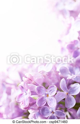 fiori primaverili, arte, fondo, lilla - csp9471460