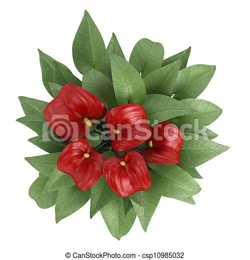 Disegni di fiori rosso anthurium anthurium fiori con for Anthurium rosso