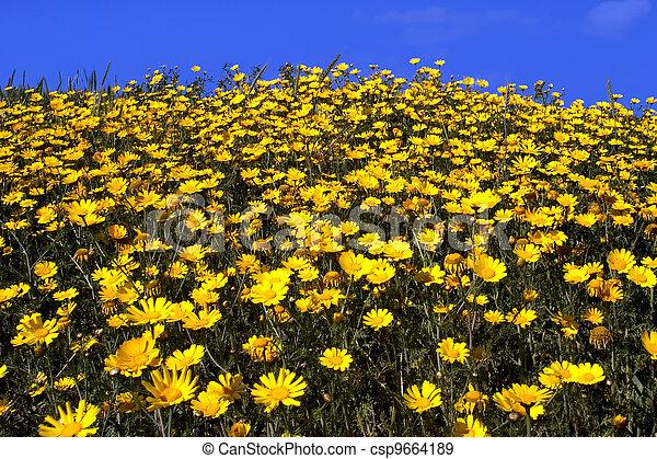 Fiori Gialli Stagionali.Fiori Selvaggi Giallo Margherita Fiori Selvaggi Field Giallo