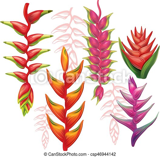 fiori, set, heliconia - csp46944142