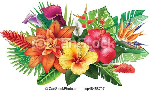 fiori tropicali, disposizione - csp48458727