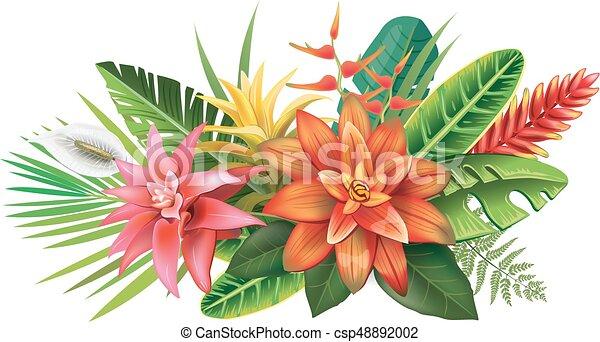 fiori tropicali, disposizione - csp48892002