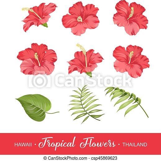fiori tropicali, set, elementi - csp45869623