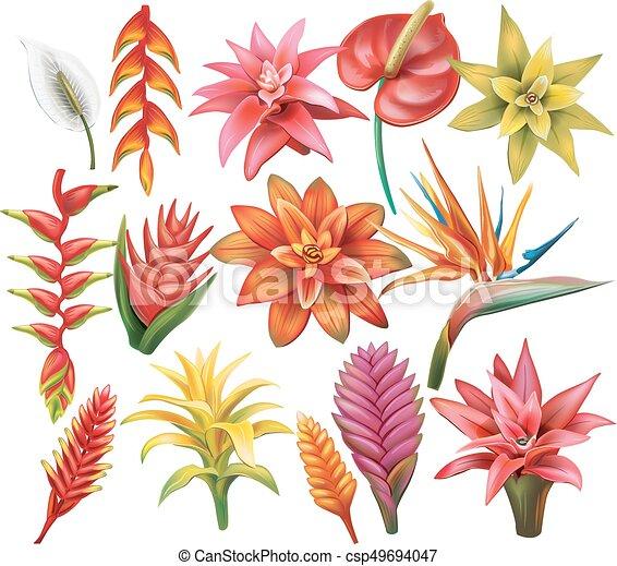 fiori tropicali, set - csp49694047