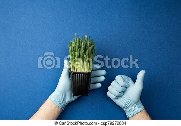fioriera, mani, presa a terra, verde, guanti, oats. - csp79272884