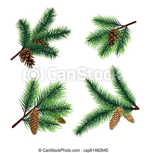 Christmas Branch Vector.Fir Branch Christmas Tree Branches With Cones Pine Xmas Vector Decoration
