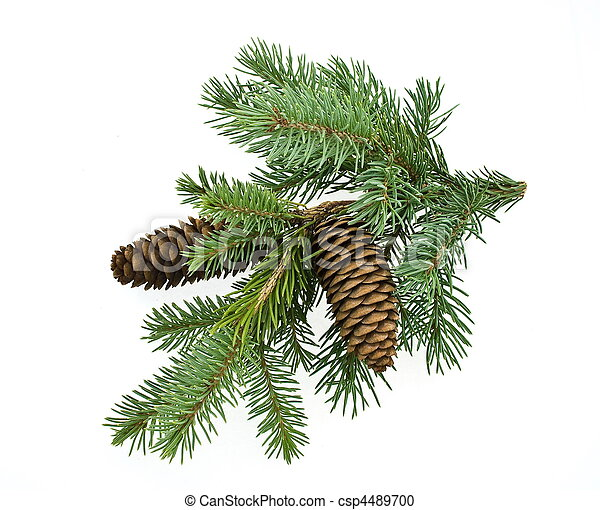 Fir tree branch with cones - csp4489700