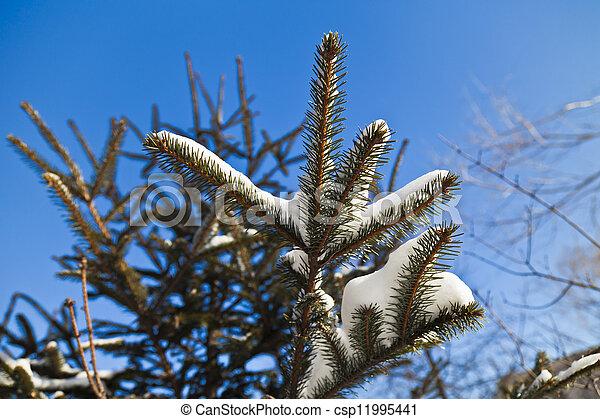Fir-tree in snow - csp11995441