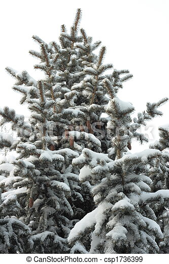Fir-tree in snow - csp1736399