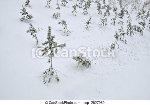 Fir-tree in winter - csp12627980