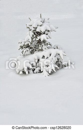 Fir-tree in winter - csp12628020