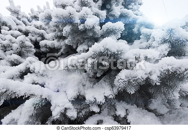 Fir-tree under snow - csp63979417
