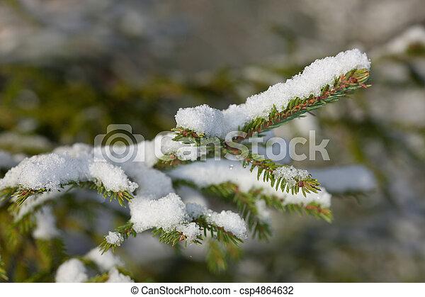 Fir tree under snow - csp4864632