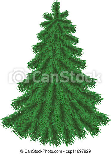 fir tree without christmas decorations csp11697929 - Christmas Tree Without Decorations